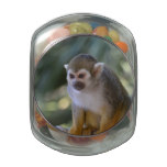 Amazing Squirrel Monkey Glass Candy Jars