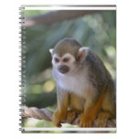 Amazing Squirrel Monkey Notebook