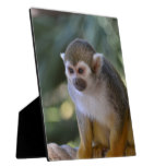 Amazing Squirrel Monkey Plaque