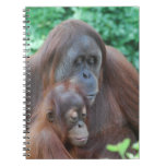 Baby Orangutan with Mother Notebook