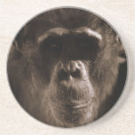Chimp Coaster