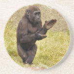Chimpanzee Coasters