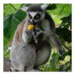 Lemur Photo Print