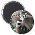 Ring Tailed Lemurs Magnet