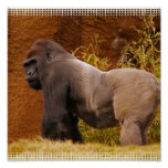 Silverback Gorilla Photo Print