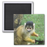 Squirrel Monkey Square Magnet